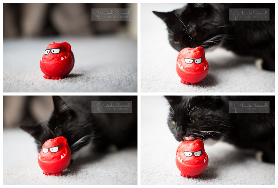 Photo of a cat sniffing a red nose