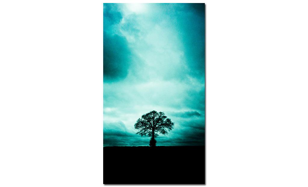 Solitude-Tree
