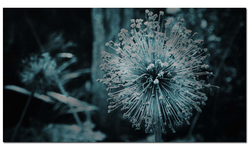 Starlight-fine-art-photo