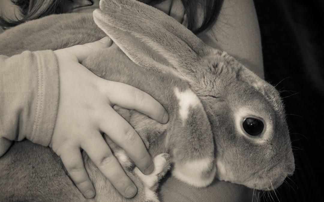 Rabbit star for Warwickshire magazine cover